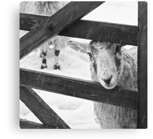 Brother, can you spare a bail of hay? Canvas Print