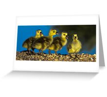 New Family of Five Goslings Greeting Card