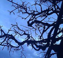 Winter Contrast by DeathlyMad