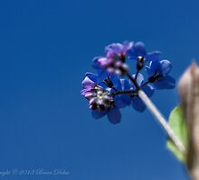 On a sunny day, even weeds are allowed their hour of glory by Brian Dukes