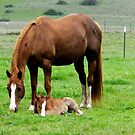 Quarter horse mare and her colt by SKNickel