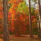 Red autumn by Kok Chu Chan