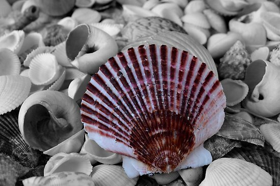 What a Shell! by rosaliemcm