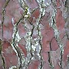 Red Bark and Lichen by Helen Greenwood