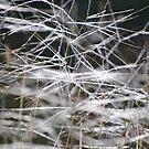 Dazzling Grasses in Sunlight by Helen Greenwood