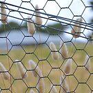 Behind bars! by Helen Greenwood