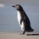 Magellanic Penguin Juvenile, Falkland Islands by Geoffrey Higges