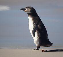 Magellanic Penguin Juvenile, Falkland Islands by Geoffrey Higges