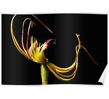 Small Mantis Orchid Poster