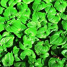 Shiny Green  by Ethna Gillespie
