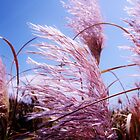 Pink New Zealand Toi Tois - Great Barrier Island by kdrummondphotos