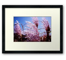 Pink New Zealand Toi Tois - Great Barrier Island Framed Print