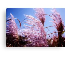 Pink New Zealand Toi Tois - Great Barrier Island Canvas Print