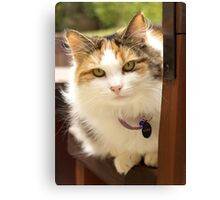 Miss Sadie Canvas Print