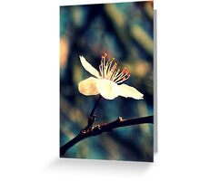 Solo Greeting Card
