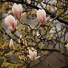 Japanese Garden by lauracronin