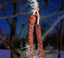 alder on ice by StoneAge