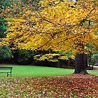 Autumn Retreat by vivsworld