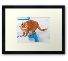 Red cat walking in the snow Framed Print