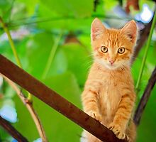 Young Kitten Sitting On Branch by GrishkaBruev