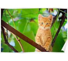Young Kitten Sitting On Branch Poster