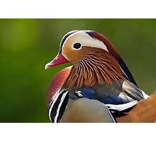 Wood Duck.. Photographic Print