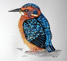 Baby Kingfisher by KarenJI1962