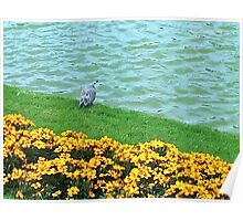 Bird in the park Poster