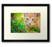 Young Kitten Is Hunting On Green Grass Framed Print
