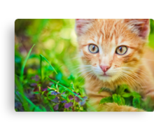 Young Kitten Is Hunting On Green Grass Canvas Print