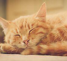Little Red Kitten Sleeping by GrishkaBruev