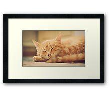 Little Red Kitten Sleeping Framed Print