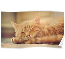 Little Red Kitten Sleeping Poster