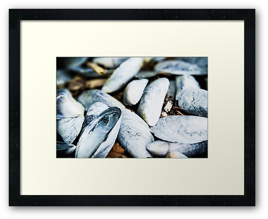 Sea Shells by mlphoto