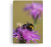 Busy Bee at Work Canvas Print