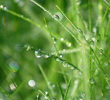 Dew on the grass by lauracronin