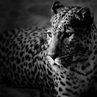 Leopard II by SandraWidner
