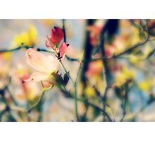 memories~ Photographic Print