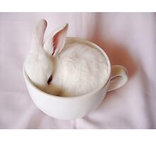 Bunny in a Cup Photographic Print
