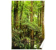 Cypress Trees Poster