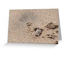 Juvenile Ghost Crab - Playas, Ecuador Greeting Card