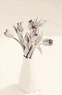 Tulips Toned by KBritt