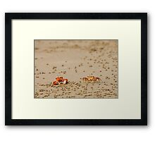 Pair of Ghost Crabs (Ocypode guadichaudii)  Framed Print