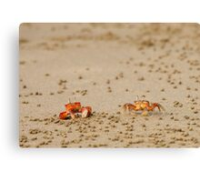 Pair of Ghost Crabs (Ocypode guadichaudii)  Canvas Print