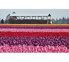 A Rainbow of Tulips Photographic Print