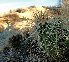 Cactus by Justin James Photography