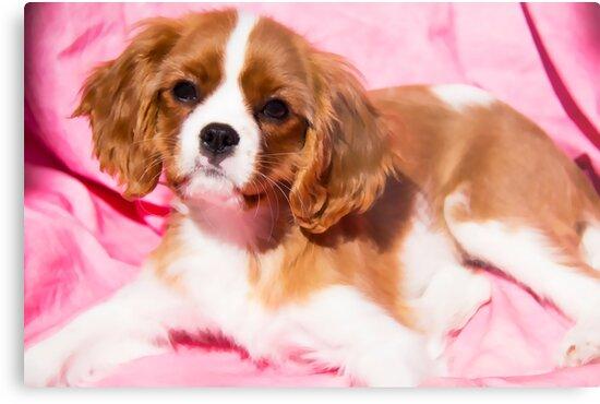 Puppy Time With Sadie by daphsam
