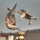 """Get off my perch!!!!!"" by larry flewers"