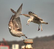 """""""Get off my perch!!!!!"""" by larry flewers"""