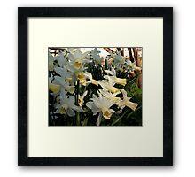 Aggressive Daffodil Framed Print